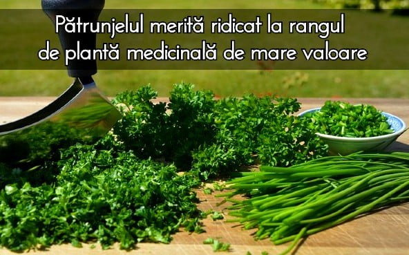 Patrunjelul o planta medicinala de mare valoare