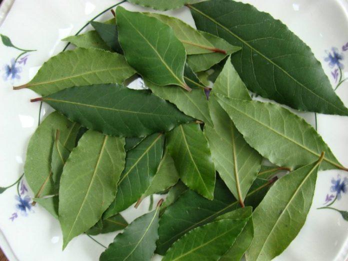 frunze dafin